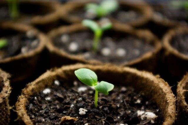 В январе можно начать посев растений с длинным сроком вегетации