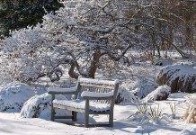 Календарь цветовода на январь
