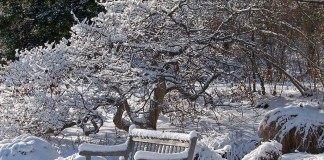В январе продолжаем стряхивать снег с деревьев и кустарников, проверяем укрытия декоративных растений
