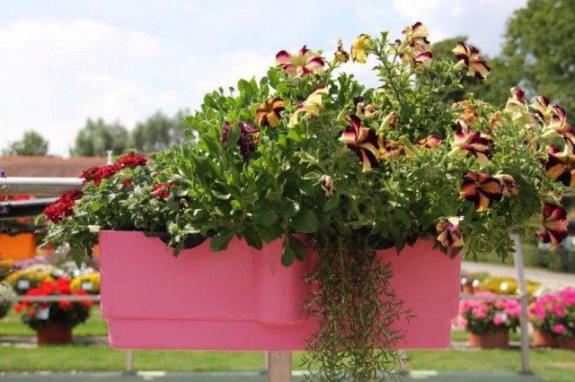 Оформление цветочной композиции в южном стиле. Использованы: розмарин, остеоспермум, петуния, вербена