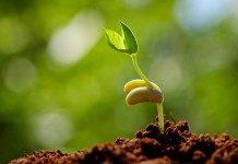 Стратификация семян в домашних условиях