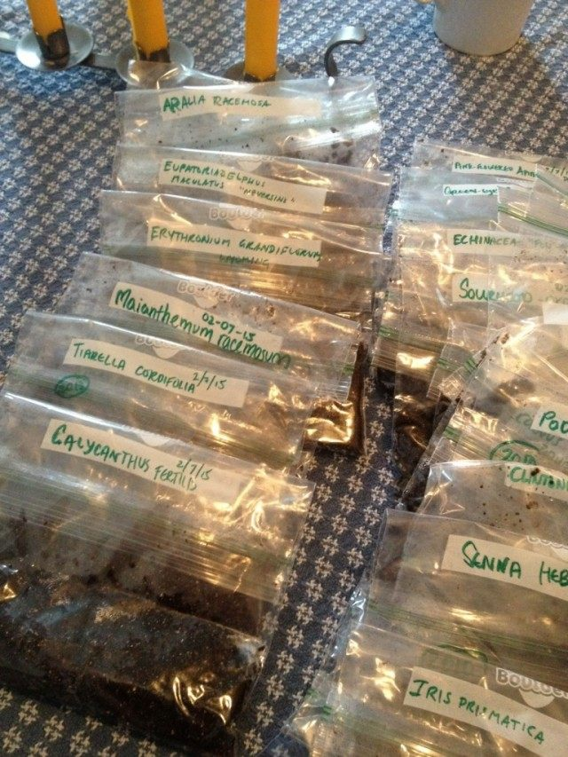 Семена декоративных растений, упакованные для хранения и стратификации
