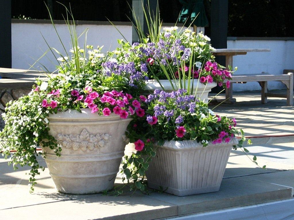дом цветы для уличных вазонов кошки человеческим меркам
