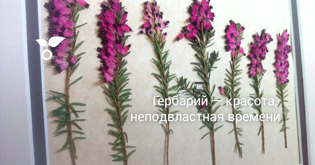 gerbariy-krasota-nepodvlastnaya-vremeni Растения для гербария