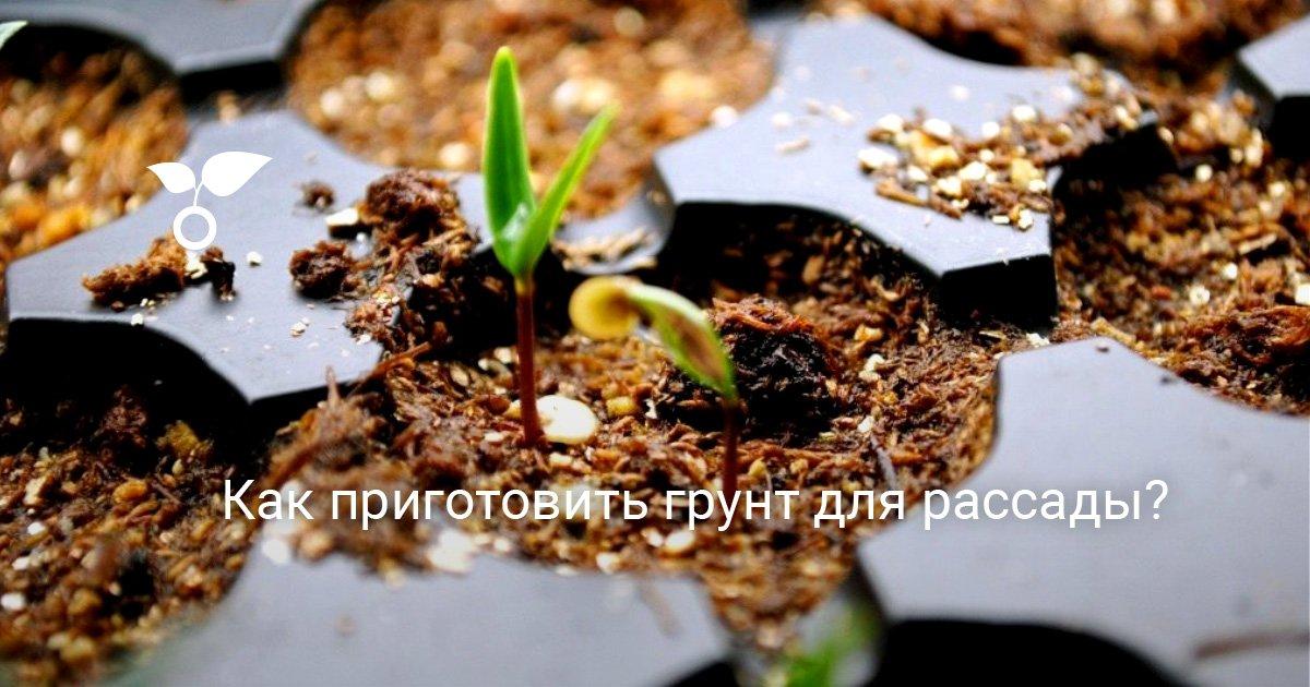 Как подготовить землю под рассаду