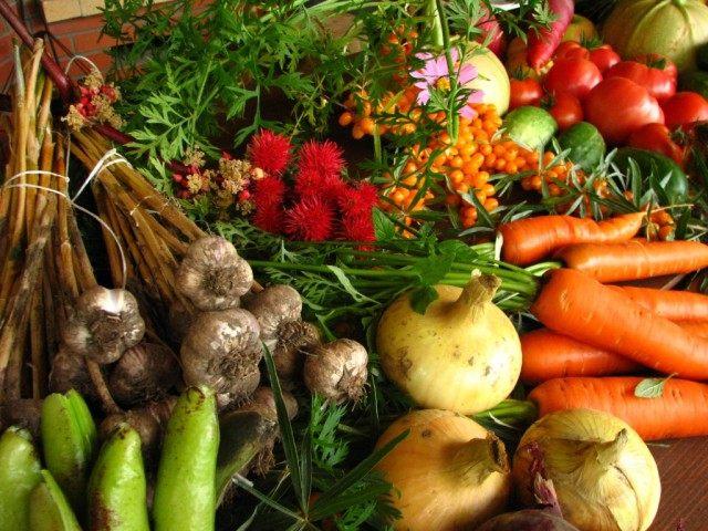 Урожай, полученный при органическом земледелии