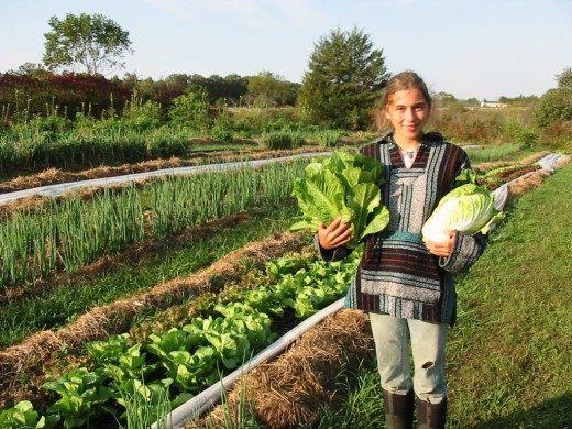 Огород в органическом земледелие