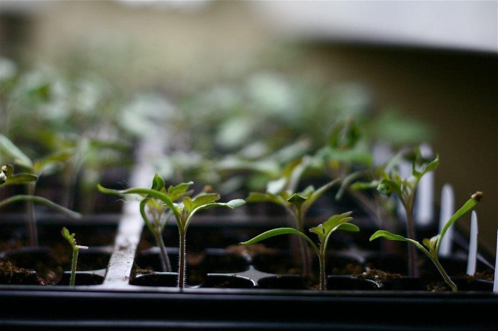 Как приготовить почвосмесь для рассады с биопрепаратами