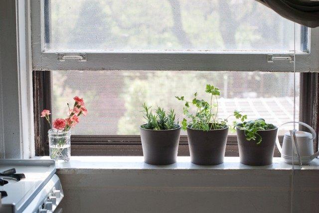 Зелень и пряные травы в горшочках можно выращивать на окне, а весной перенести в сад