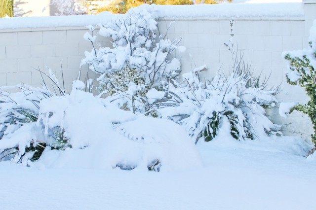 Проводим мониторинг сада и цветников. Подгребаем снег для защиты растений