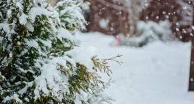 Календарь цветовода на февраль - Цветник и ландшафт