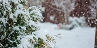 В календаре каждого садовода февраль – пора предчувствия и нетерпения