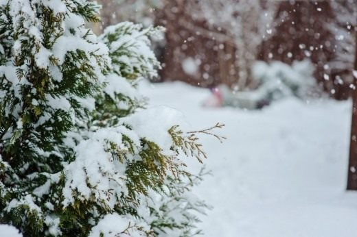 В календаре каждого садовода февраль пора предчувствия и нетерпения