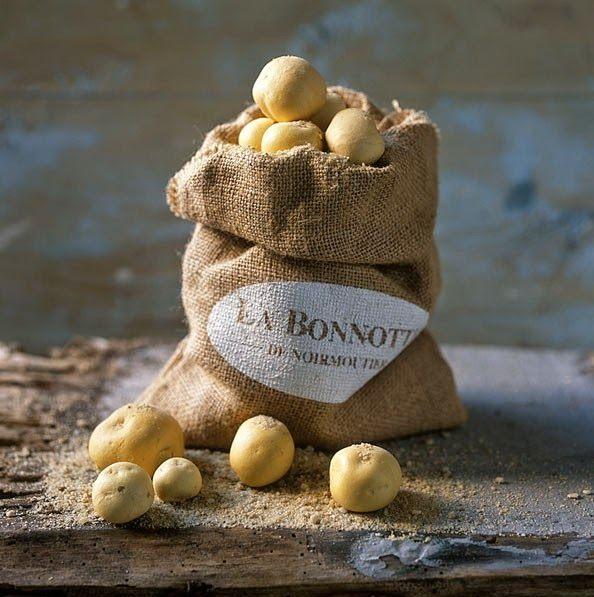 Bonnotte-06