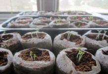 Календарь садово-огородных работ на февраль