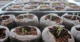 Календарь садово-огородных работ на февраль - Сад и огород