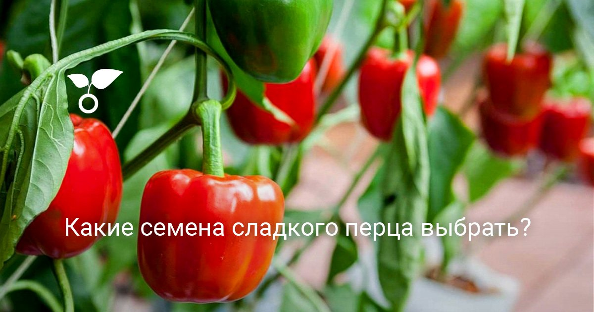 Как подобрать семена перца для своего огорода