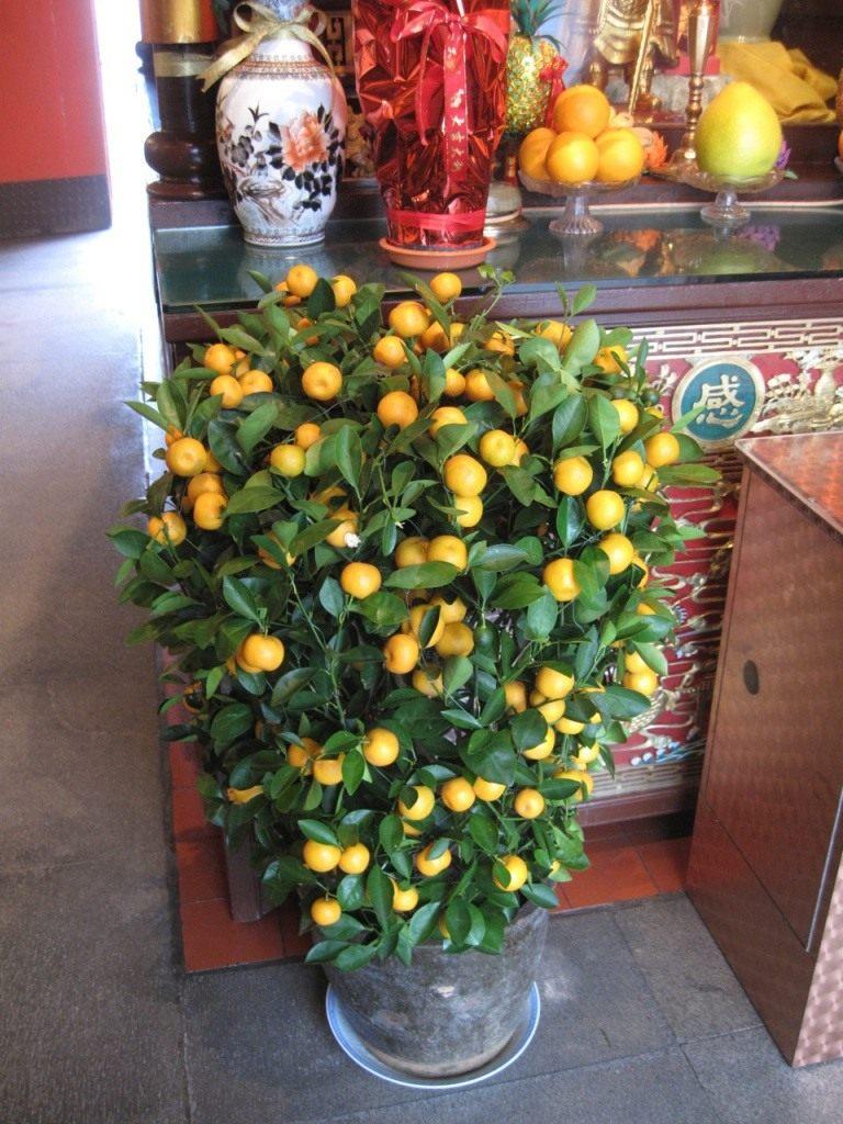 mandarin-trees-02