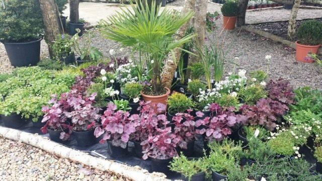 Пример высадки растений для загущенной посадки в цветнике