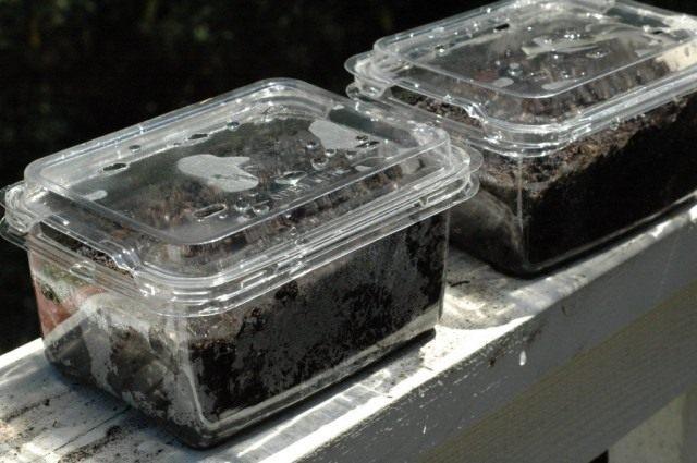 Мини-парничок для проращивания семян