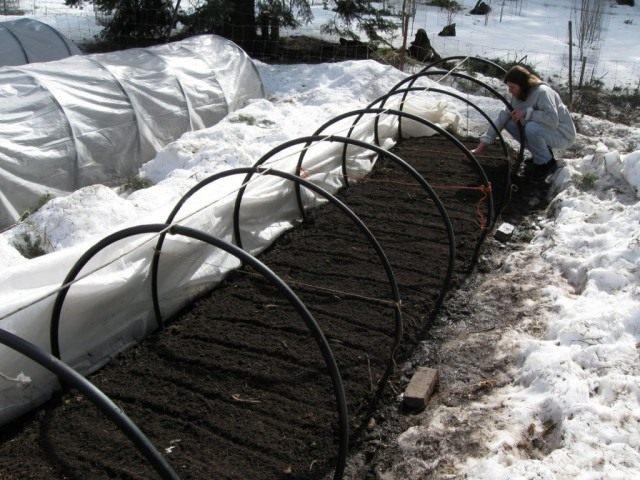 В марте, если почва достаточно прогрелась, можно высеять и редис, и устойчивую к низким температурам зелень