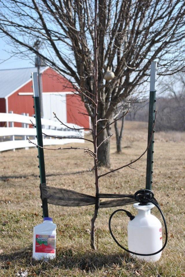 Весенняя обработка сада от вредителей