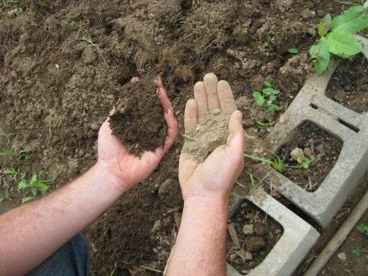 ЭМ-препараты ускоряют процессы гумусообразования, увеличивая количество гуминовых кислот, необходимых растениям