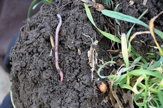 ЭМ-препараты насыщают почву полезной микрофлорой, которая «лечит» почву