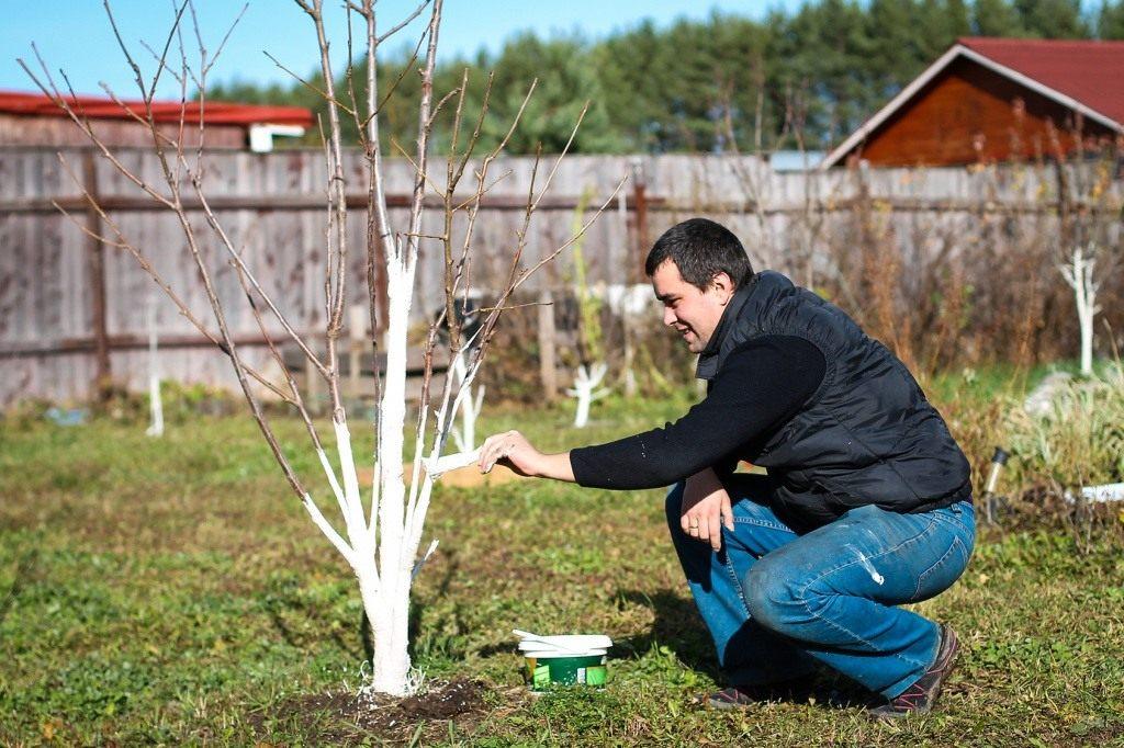 обработка деревьев от паразитов