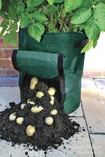 Potato-pot2