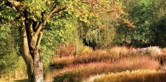 Крупные деревья в саду могут стать родовыми и радовать несколько поколений