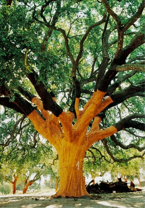 Whistler-Tree