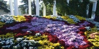 Композиция из хризантем на ежегодной выставке «Бал хризантем» в Никитском ботаническом саду