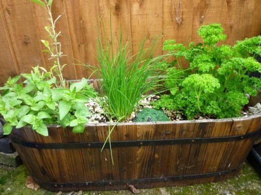 Многие из растений, способных смириться со скудным освещением можно вырастить и в отдельных контейнерах