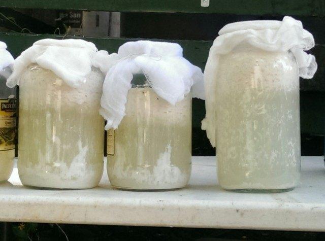 Основу для ЭМ-препаратов можно приготовить из кислого молока