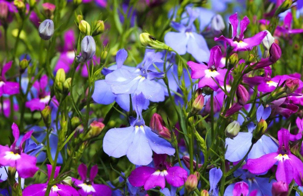 виды суккулентных цветов фото