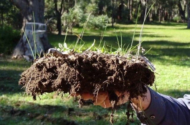 Пласт земли обогащенной эффективными микроорганизмами