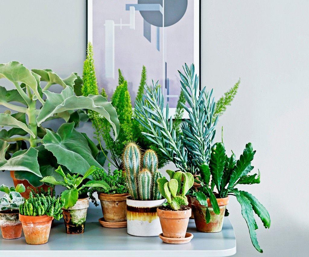 Самые неприхотливые комнатные растения (ФОТО) в 2019 году