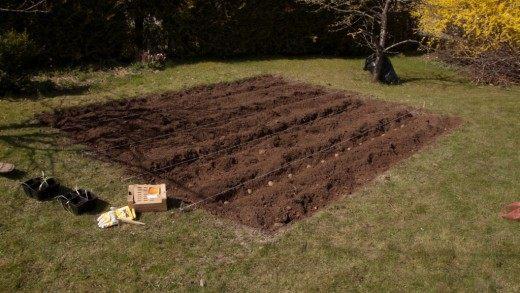 Почву для картофельных грядок готовят с осени