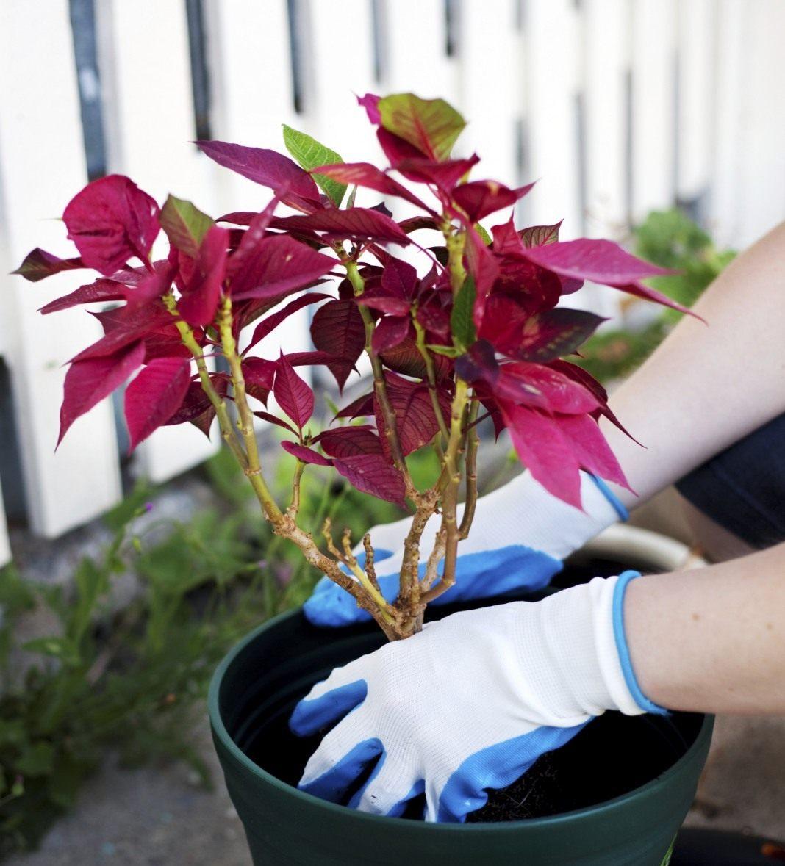 Как правильно ПЕРЕСАЖИВАТЬ комнатные растения и цветы