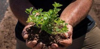 Биопрепараты восстановливают почвенное плодородие