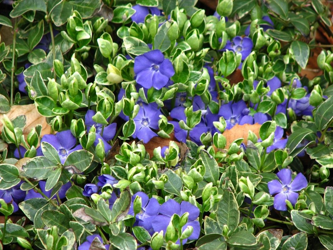 Как посадить многолетние цветы на кладбище чтобы они цвели всё лето