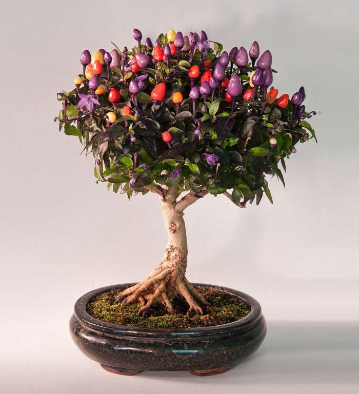 amazing-bonsai-trees-25-5710f90bdc5e1__700