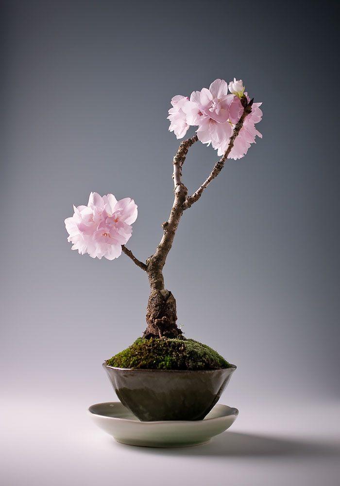amazing-bonsai-trees-3-1-5710e79064ec0__700