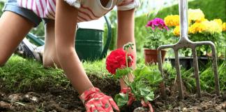 Посадка декоративных растений в цветник