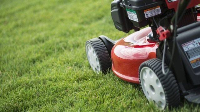 Ремонтируем газоны и проводим первые стрижки