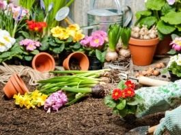 Май для цветоводов месяц активных работ