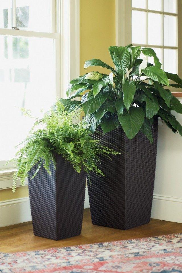 Комнатные растения в высоких вазонах