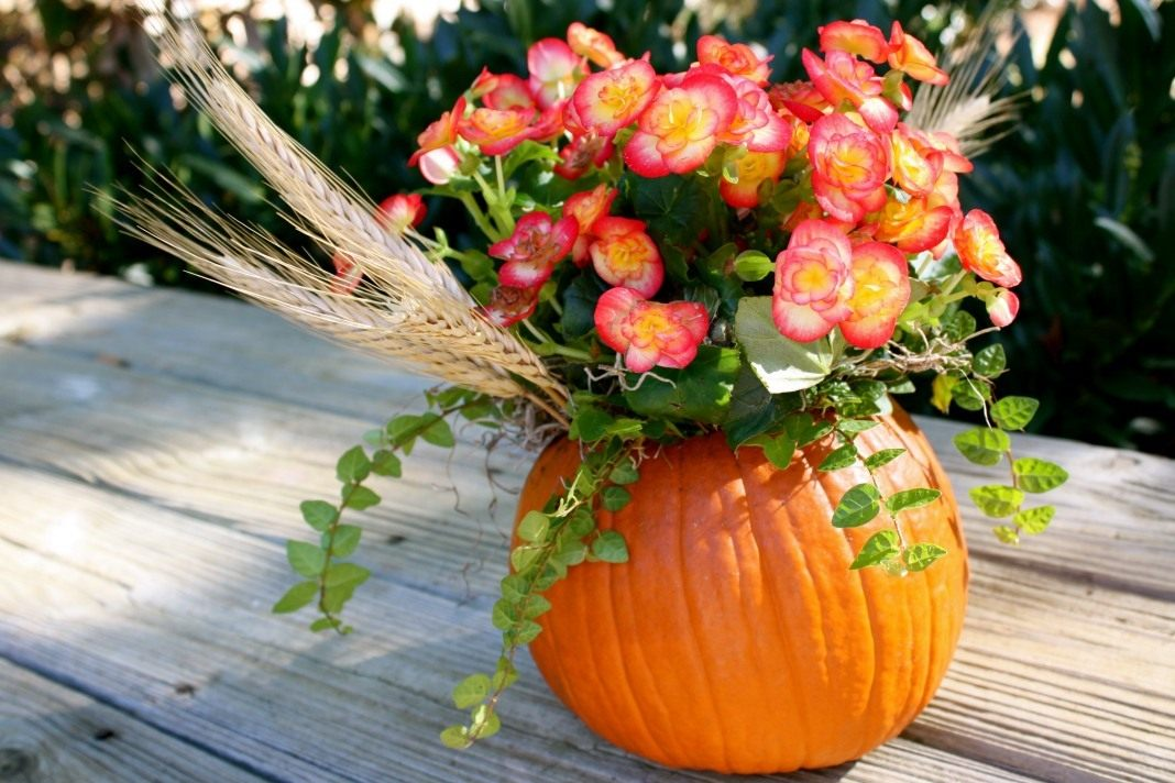 pumpkin-flower-pots-01