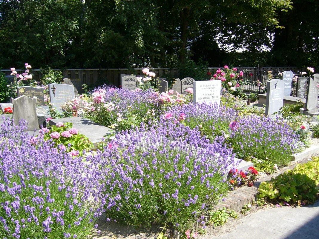 Могильные цветы названия